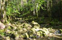 Camping Le Mas de Reilhe Crespian